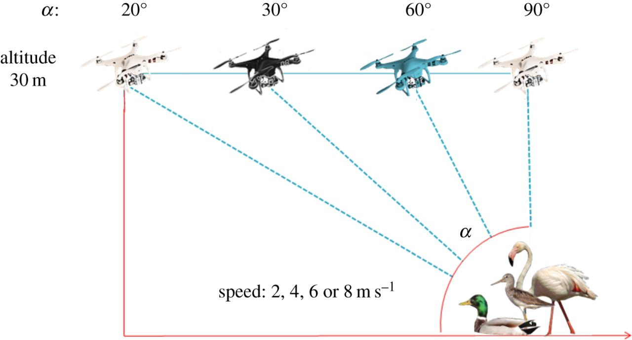 Estudio de Aves con Dron