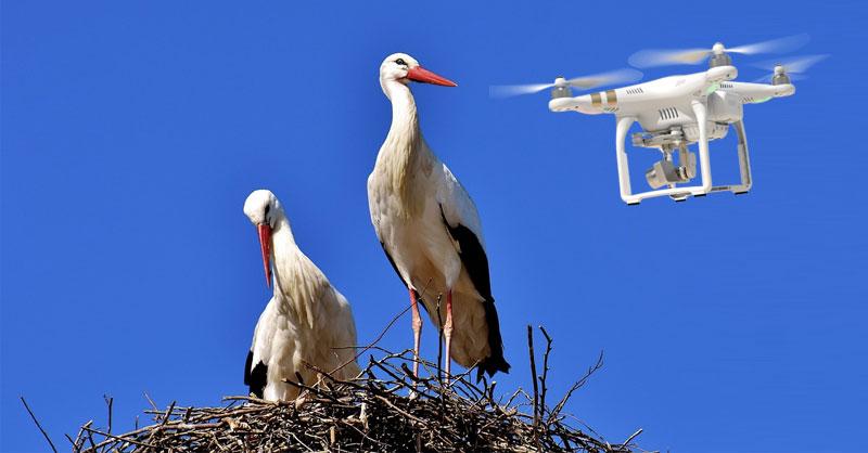 Aves y cartografía de zonas peligrosas para drones