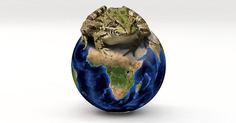 Cartografía de anfibios y reptiles