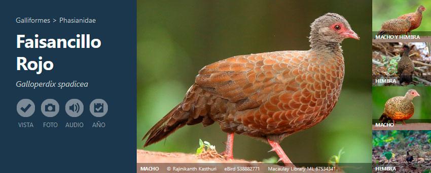 Fichas de distribución de aves