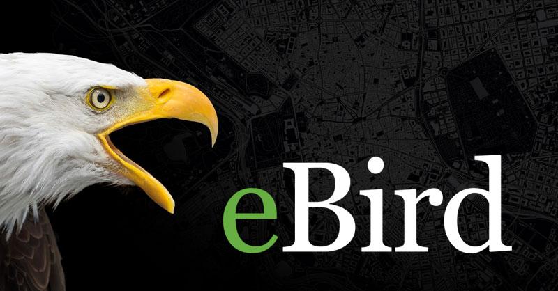 Cartografía de distribución de aves con eBIRD