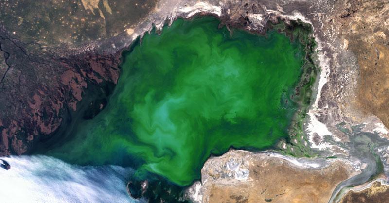 En busca de los bloom algae en las imágenes satélite