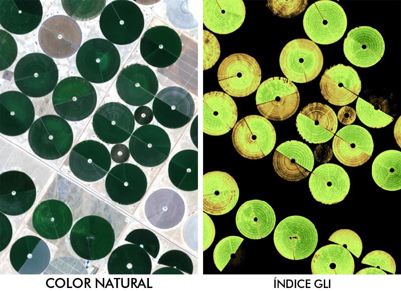 Indice de vegetación GLI