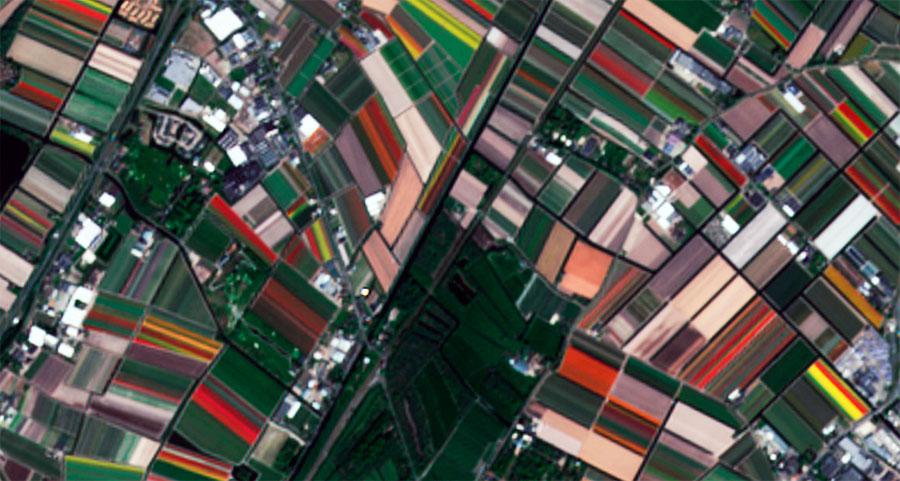 Cultivos de tulipanes en imágenes satélite