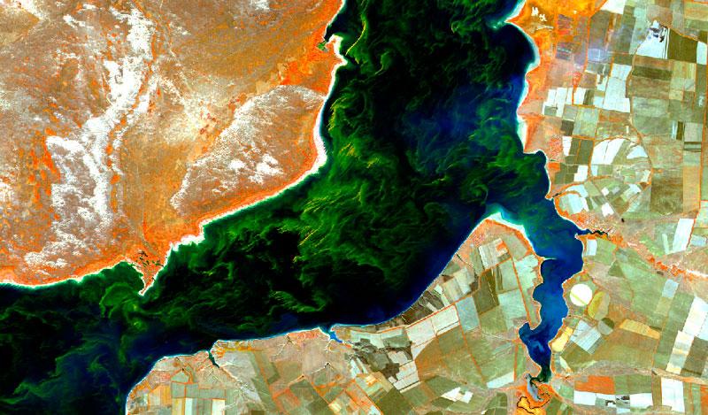 Presencia de cianobacterias en ambientes acuáticos