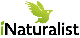 iNaturalist, cartografía de distribución de espeices