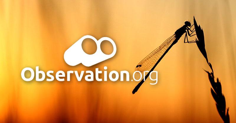 Observation: cartografía de biodiversidad mundial