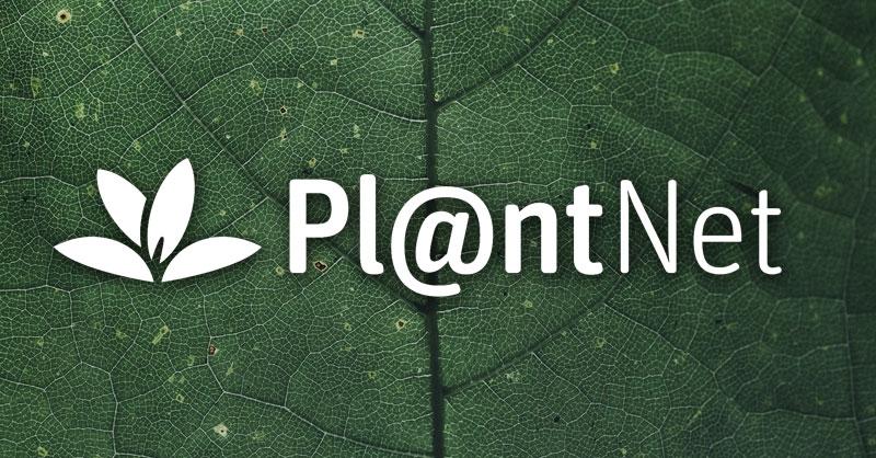 Pl@ntNet: distribución de flora por ciencia ciudadana