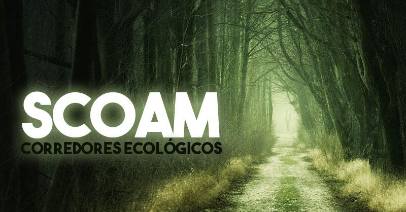 SCOAM corredores ecológicos para conectividad territorial
