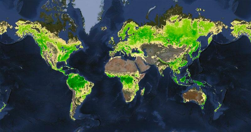 Cobertura de bosques mundial